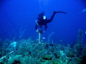 saba-bank-expedition-video-transect2