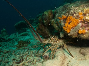 lobster-4x3
