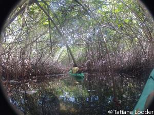 fieldwork-mangroves