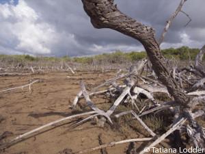 mangrove-research-area-Lac