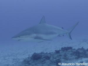 shark-300x225-ground